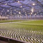 Комплексы по обеспечению углекислым газом тепличных культур